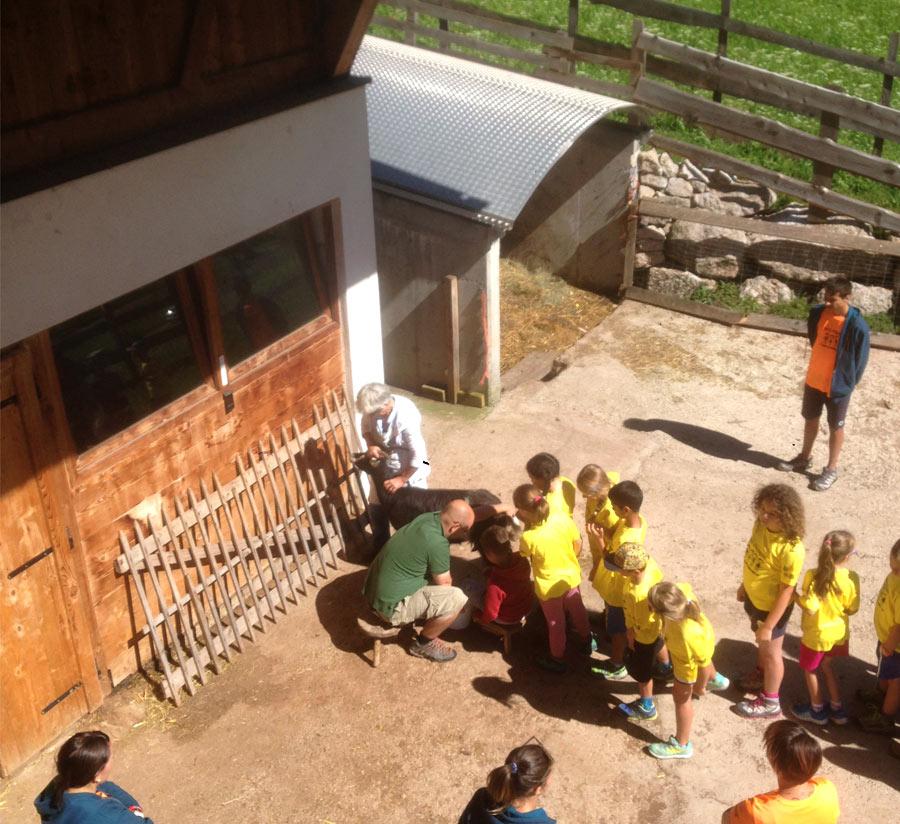 Alessandro Fattoria Didattica per bambini in Val di Fassa