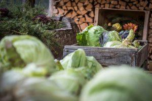 Azienda agricola biologica ortaggi