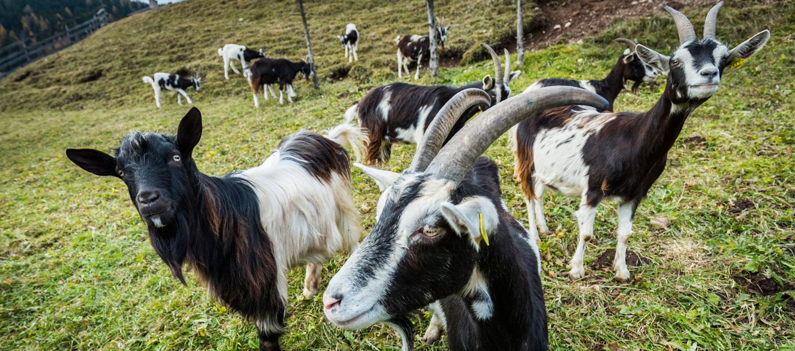 Azienda agricola biologica in Val di Fassa