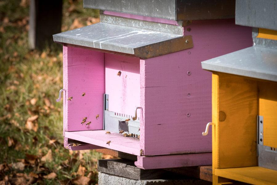 Azienda agricola miele apicoltura Val di Fassa