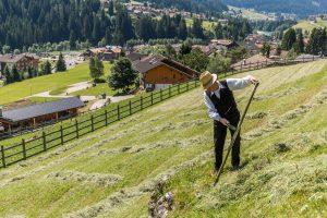 Agriturismo Biologico in Val di Fassa • Luigi Brunel