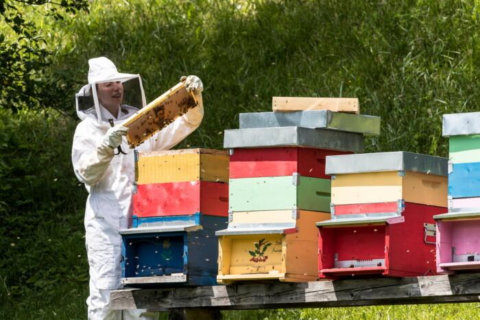 Fattoria Didattica dell'Agritur in Val di Fassa, produzione miele, Aurora Brunel