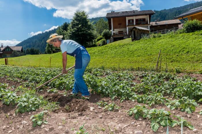 Osteria Contadina a Km 0 in Val di Fassa, produzione ortaggi, Flavia