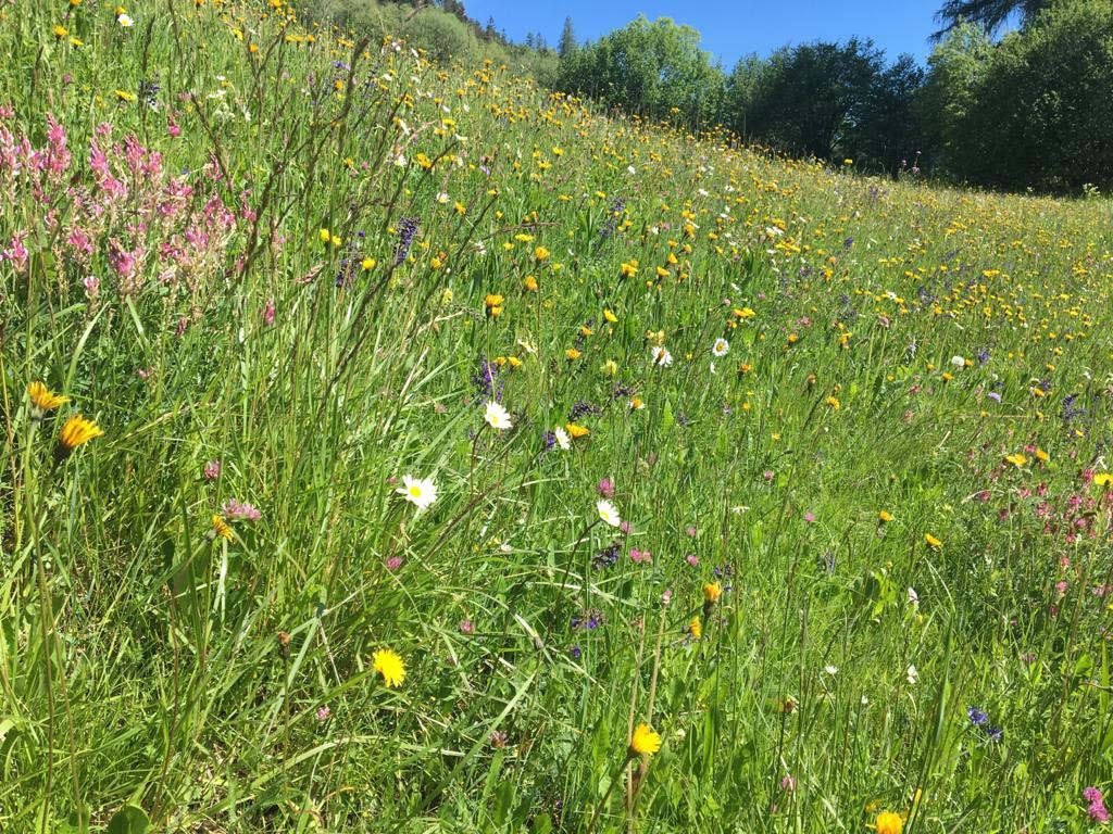 prato fiorito in estate